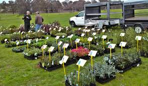 cheap native plants cheapest places to buy plants in canberra canberra