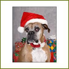 boxer dog xmas wilderness light images mark u0026 leslie degner pets gallery