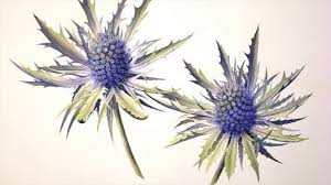 Fragrant Bedding Plants Enjoy Sea Holly Gardening With These Simple Guidelines Powerful
