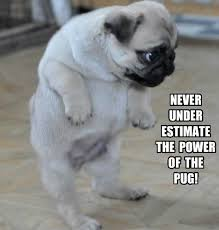 funny pug dog meme pun lol pugs pinterest meme dog and animal