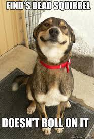 Dead Squirrel Meme - good dog greg memes quickmeme