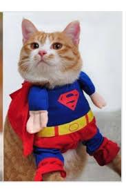 Kitten Halloween Costumes Pet 19 Superhero Pets Images Superhero Animals