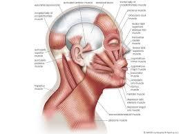Anatomy The Human Body Characteristics Of The Human Body Quiz Britannica Com