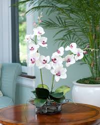orchid arrangements enhance your room decor with phalaenopsis silk orchid arrangement