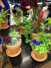 container gardening urban container gardening classes plant talk