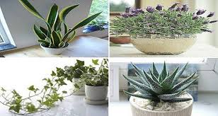 Plant For Bedroom These 4 Plants For Your Bedroom Will Cure Insomnia And Sleep Apnea