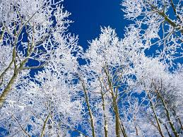 photos of snow snow descent of god s mercy snow snow covered trees and winter