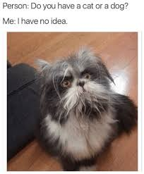 Meme Animals - 16 animal memes that are sure to make you laugh cutesypooh
