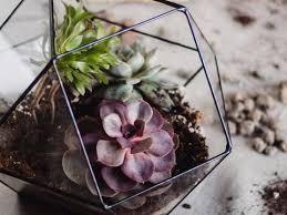 terrarium containers by waen