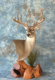 Deer Pedestal Whitetail Deer Morris Outdoors Taxidermy