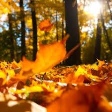 Why Fall Is The Best Season Fall Noyze Org