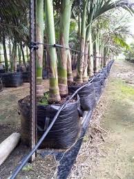 tree bags pioneer agro industries terrace gardening green