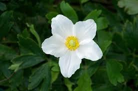 white flower free white flower pictures free stock photos 17 270 free