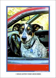 26 best lightmark press dogs in cars greeting cards images on