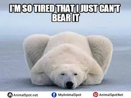 I M So Tired Meme - 19 very funny polar bear meme images and pictures memesboy