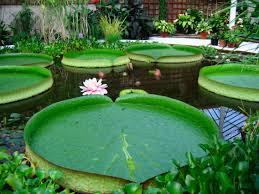 beautiful plants http www bing com images search q beautiful plant nurseries