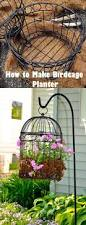 How To Keep Birds Off Your Patio by 25 Unique Birdcage Planter Ideas On Pinterest Succulents Cheap