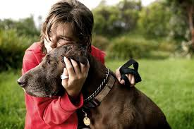 Temporary Blindness In Dogs What To Do If Your Dog Has A Seizure