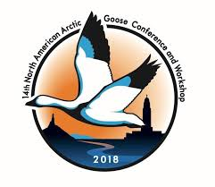 arctic fox tails 4 39 waters west fly fishing outfitters 14th north american arctic goose conference and workshop program and