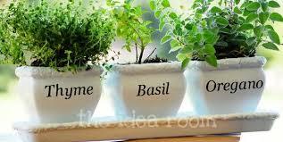 indoor herb garden planters