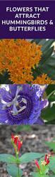 best 25 hummingbird habitat ideas on pinterest hummingbird