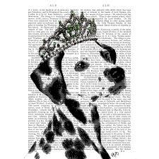 affenpinscher webster s dalmatian crown fab funky cad eauonline fun art pinterest