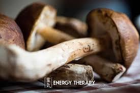 mushroom guide reishi u0027the mushroom of immortality u0027 and lion u0027s