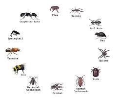 garden design garden design with pest identification bed bugs