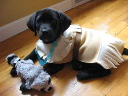 Lab Halloween Costume Ideas One Little Word She Knew Pocahontas Puppy Costume Tutorial