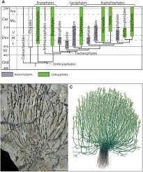 the origin and early evolution of roots plant physiology
