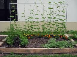 raised bed vegetable garden layout home outdoor decoration