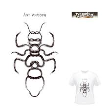 anatomy of an ant google search ants and termites pinterest