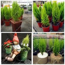 mini fir tree promotion shop for promotional mini fir tree on