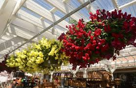 Hanging Plants For Patio Low Maintenance Plants Fill Beautiful Yards