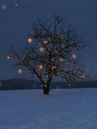 decorating outdoor trees with christmas lights my web value