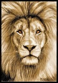 57 lions leos images animal kingdom animal
