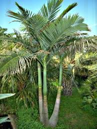 i need a growth booster for my palm seedlings