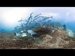 watch online chasing coral 2017 full movie hd trailer chasing coral full movie documentary download youtube