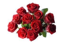 dozen of roses one dozen roses hotel harrington