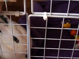 Diy Indoor Rabbit Hutch How To Build An Indoor Bunny Cage