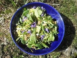 la cuisine des plantes sauvages atelier cueillette et cuisine de plantes sauvages stage atelier