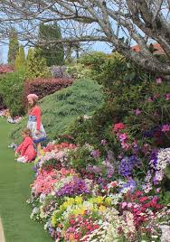 all year colour study learn garden design at home