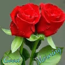 whatsapp wallpaper red good morning with red flower jkahir com hd wallpaper whatsapp