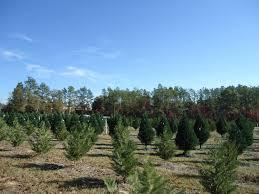 gays christmas tree farm rainforest islands ferry