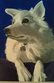 american eskimo dog growth chart 65 best american eskimo dog images on pinterest american eskimo