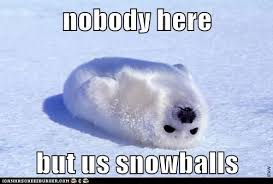 Baby Seal Meme - animal capshunz harp seal funny animal pictures with captions