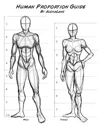 Anatomy Of Human Body Sketches 95 Best Human Proportions Images On Pinterest Drawing Tips Draw