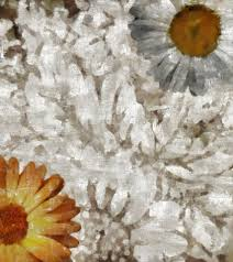 Chic Flower Shabby Chic Flower Collage Free Stock Photo Public Domain Pictures