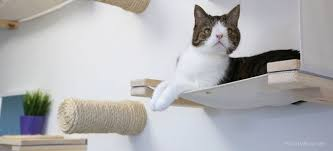 Cat Trees For Big Cats Unconventional Cat Furniture For Feline Instincts Catastrophic