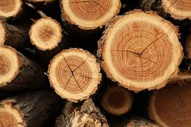 the lesson of the tree rings meridian magazine
